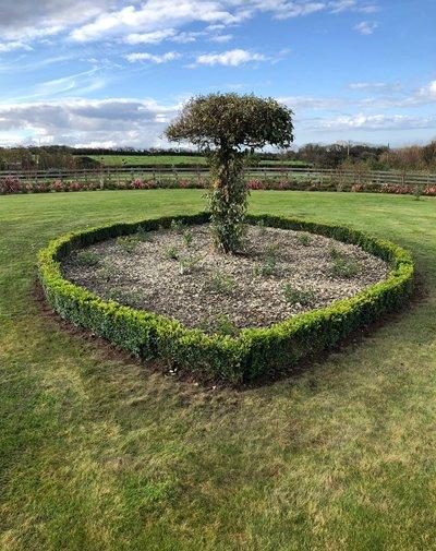 McGowan Landscapes planting specialist tree